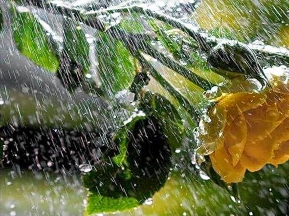 Risultati immagini per pioggia d'estate poesia